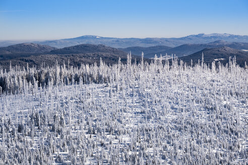 Germany, Bavaria, view from Lusen at snow-covered Bavarian Forest with natural regeneration - SIEF07400