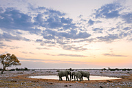 Namibia, Etosha National Park, three elephants at a waterhole at sunset - GEMF01591