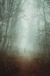 Man on forest path in fog - DWIF00845