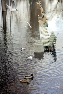 Birds and flooded benches - KNTF00830