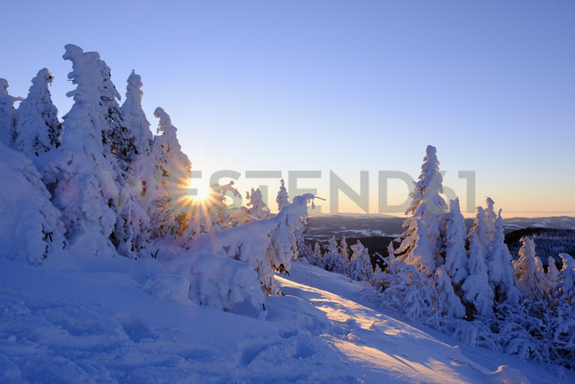 Germany, Bavaria, Bavarian Forest in winter, Great Arber, snow-capped spruces at sunrise - SIEF07415