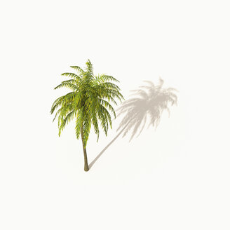 Palm tree with shadow on white background, 3D Rendering - UWF01174