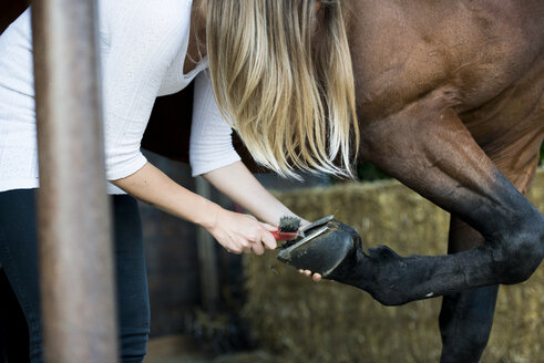 Young woman grooming horse - ZOCF00226