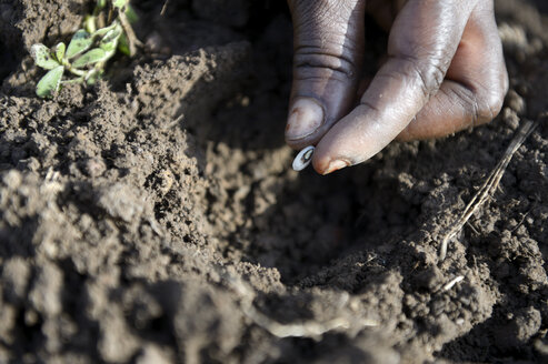 Burkina Faso, Zambele, hand with bean in soil - FLKF00804
