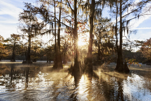 USA, Texas, Louisiana, Caddo Lake, Benton Lake, bald cypress forest - FOF09243