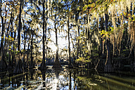 USA, Texas, Louisiana, Caddo Lake State Park, Saw Mill Pond, bald cypress forest - FOF09252