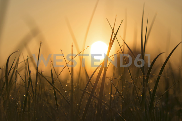 Blades of grass with morning dew at sunrise - BSTF00108