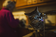 Tabby cat drinking water from the faucet in the kitchen - RAEF01870