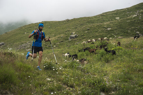 Italy, Alagna, trail runner on the move on alpine meadow - ZOCF00270