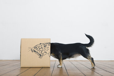 Roaring dog inside a cardboard box painted with a leopard - PSTF00026