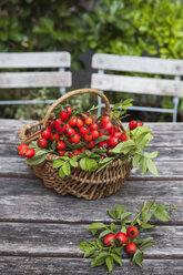 Wickerbasket of rosehips on garden table - GWF05207