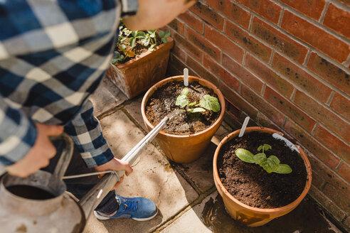 Boy watering seedling in flower pot - NMSF00120
