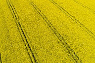 Germany, Bavaria, Tire tracks in a rape field - MAEF12198