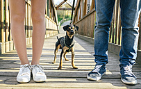 Dog between legs of couple on a bridge - DAPF00747