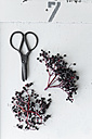 Black elder and scissors on white background - ASF06084