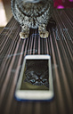 Mirror image of cat on display of smartphone - RAEF01878