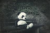 Panda soft toy on a bench - DWIF00855