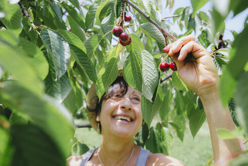 Happy senior woman picking cherries - GEMF01658