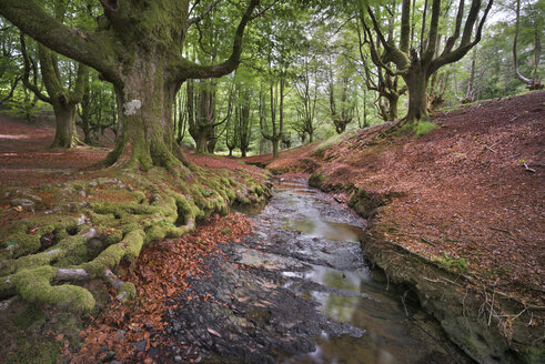 Spain, Basque Country, Gorbea Natural Park, Otzarreta forest - DHCF00074