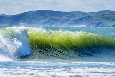 New Zealand, North Island, Raglan, Ngarunui Beach, Manu Bay, breaking wave - STSF01227
