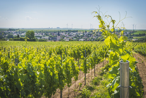 Germany, Westhofen, view to the village with vineyards in the foreground - KEBF00571