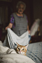 Portrait of ginger cat on alert while elderly woman making the bed - RAEF01887