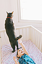 Baby girl lying in crib trying to reach the tail of a cat - GEMF01695