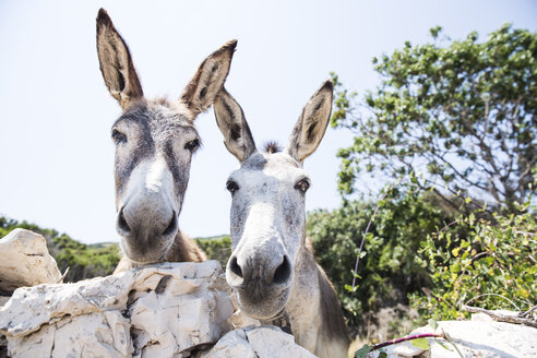 Portrait of two donkeys - MAEF12354