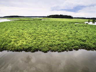 USA, Virginia, Marshes of the Chickahominy River - BCDF00299
