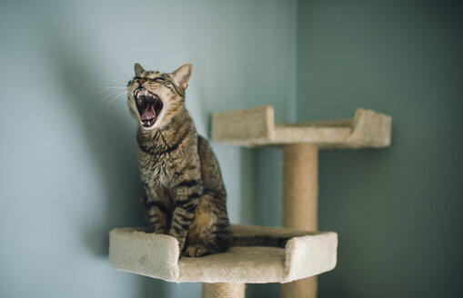 Portrait of yawning cat sitting on scratching post - RAEF01901