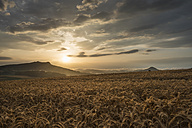 Germany, Constance district, barley field at Hegau with Hohenstoffeln in the background by sunset - ELF01860