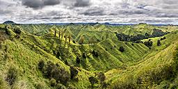 New Zealand, North Island, Taranaki, landscape seen from Forgotten World Highway - STSF01270