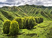 New Zealand, North Island, Manawatu-Wanganui Region, landscape - STSF01273