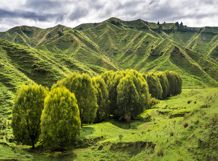 New Zealand, North Island, Manawatu-Wanganui Region, landscape - STSF01273