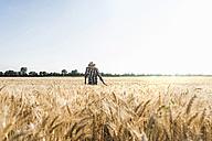 Senior farmer in a field examining ears - UUF11167