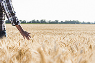 Senior farmer in a wheat field, partial view - UUF11170