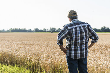 Back view of senior farmer standing in  front of wheat field - UUF11179