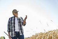 Senior farmer in a field examining ears - UUF11185