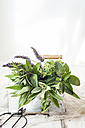 Basket of variuos fresh herbs - SBDF03265