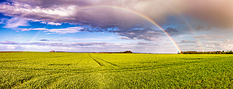 UK, Scotland, East Lothian, rainbow over field - SMAF00785