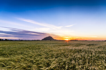Uk, Scotland, North Berwick, field of barley at sunset - SMAF00797
