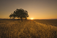 Lonely tree at scenic sunset - DHCF00112