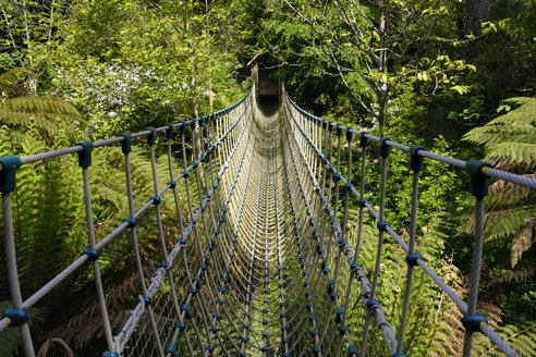 UK, England, Cornwall,  The Lost Gardens of Heligan, jungle, Burma rope bridge - SIE07464