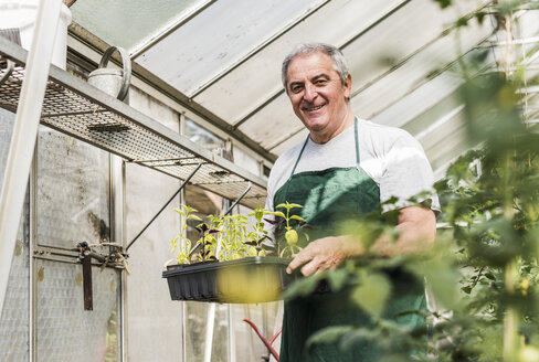 Smiling senior man in greenhouse holding tray with seedlings - UUF11295