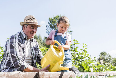 Grandfather and granddaughter in the garden watering plants - UUF11313