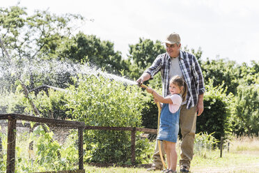 Grandfather and granddaughter in the garden watering plants - UUF11331