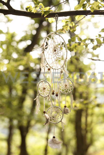 Dream catcher in tree - MFRF00934