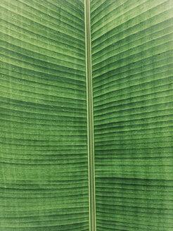 Bali, Indonesia, Palm Leaf - JUBF00245