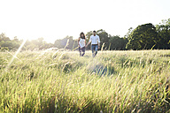 Couple in love walking hand in hand on a meadow at sunset - IGGF00052