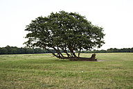 Young couple under an old tree - IGGF00058